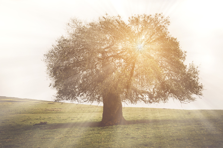 family history: Oak Tree for Family History with Vintage Stock Photo