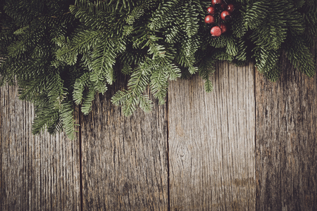 evergreen: Tree branch with Holly Berry on rustic wooden background used for christmas decoration Stock Photo