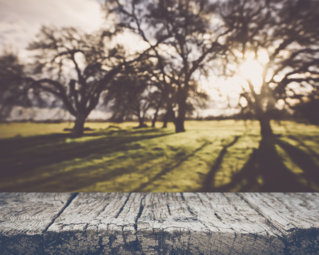 Blurred Nature background with Vintage Style Background