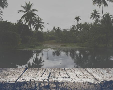 wetland: Pond in a Tropical Forest with Retro Style Filter