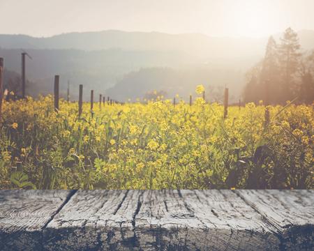 Vineyard in Spring with Vintage 版權商用圖片
