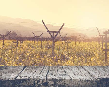 Vineyard in Spring with Vintage Film Style Filter