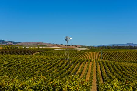 napa: Vineyard in Napa Valley California