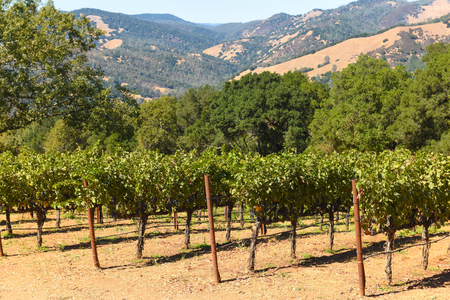 Napa Valley California Vineyard Reklamní fotografie