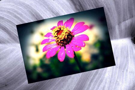 grunge: Vintage retro grunge flower art texture background