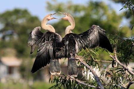 unrestrained: stork bird
