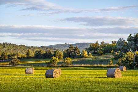 Hay rolls on green field at sunset Standard-Bild