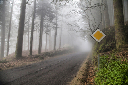 mounts: Deep fog on the forest road in mounts of Madeira island, Portugal