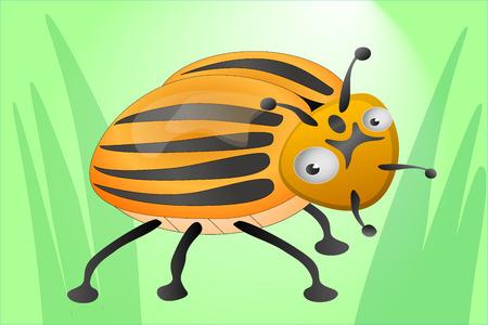 colorado: Funny colorado beetle in geen grass
