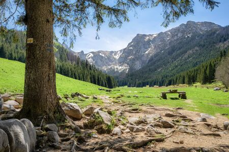 View of glade in the Small Meadow Valley in Tatra mountains, Poland Standard-Bild
