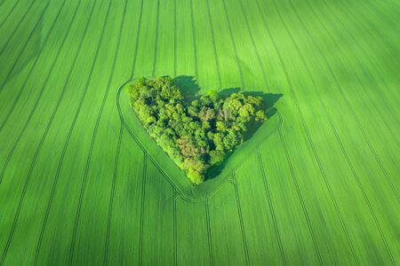 Aerial view of heart-shaped small forest surrounded by wheat field in Poland