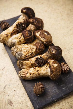 sewn up: Mushroom Stock Photo