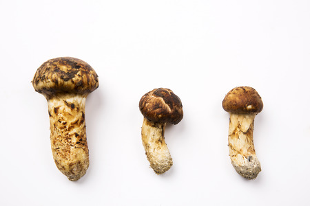 outside shooting: Mushroom Stock Photo