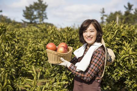 basketful: Middleaged Asian Female Farmer Holding a Basketful of Apples