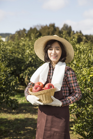 Middleaged Asian Female Farmer Holding a Basketful of Apples