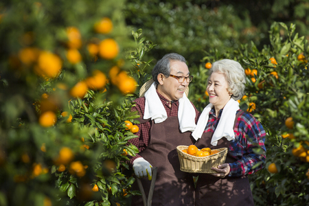 Asian Elderly, Senior Lifestyle Imagens