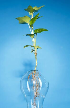 Growing plant isolated in a bulb
