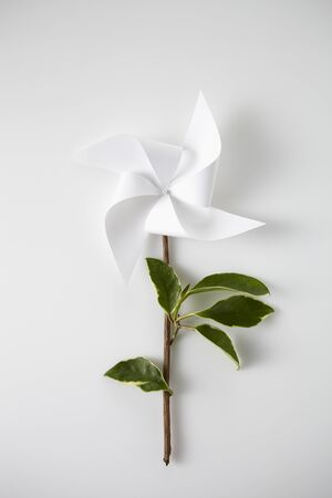 vane: White vane flower isolated Stock Photo