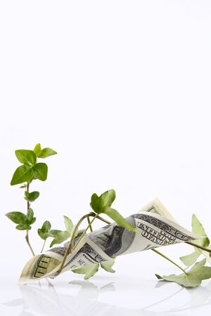 hurting: Growing plant tangled with money isolated Stock Photo