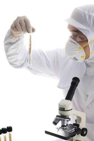 Laboratory testing and GMO wheat Stock Photo