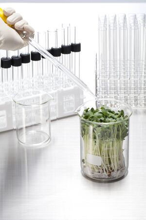 Lab-grown sprouts