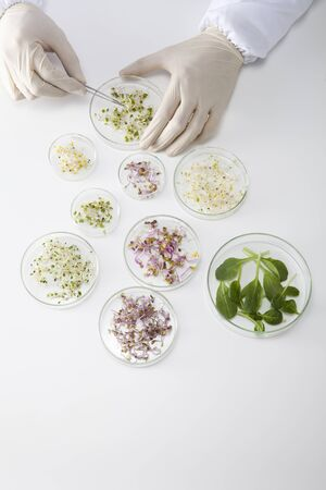 petri: Petri dish experiments Stock Photo