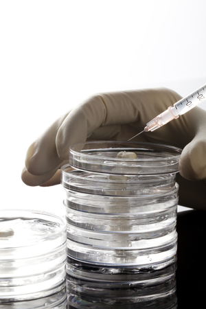 petri: Petri Dishes
