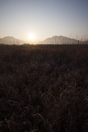 canne: Reeds fields Archivio Fotografico