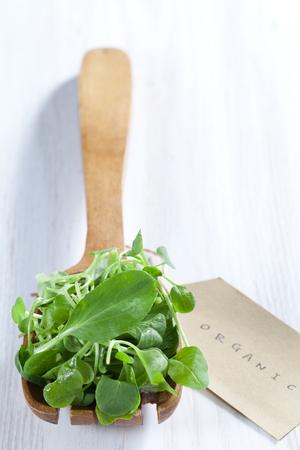 Fresh Green Watercress