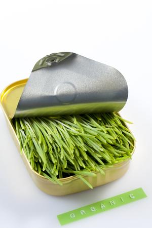 sardine can: A Sardine Can Filled With Barley Grass Stock Photo