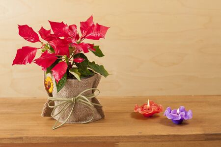 christmas flower: Christmas flower;  canbles