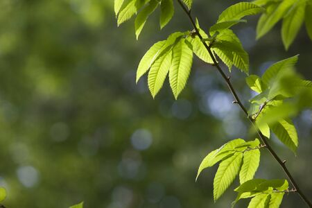 color photographs: South Korea, Spring, leaf