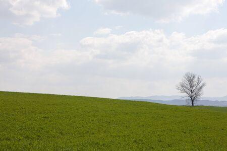 tranquillity: South Korea, Gyeonggi-do, Anseong ranch spring landscape,  zelkova trees, Stock Photo
