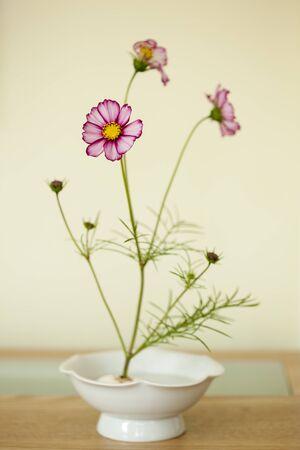 cosmos flowers: Cosmos flowers,Flower arrangement Stock Photo