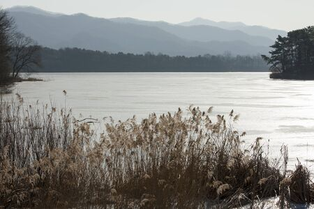 canne: winter; Rivers, reeds