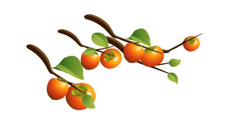 icon persimmon