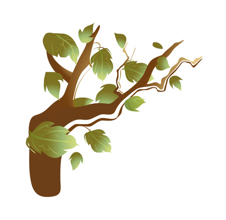 a bough: vector illustration: nature