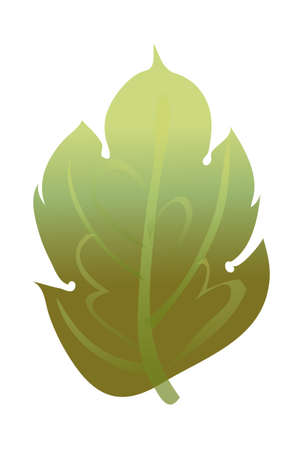 Vector illustration: nature Illustration