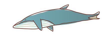 vector illustration: sea Illustration