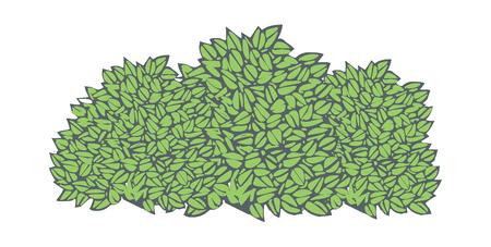 vector illustration: plant Illustration