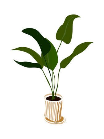 blade: Concept of a Vector Illustration:  plant on a vase