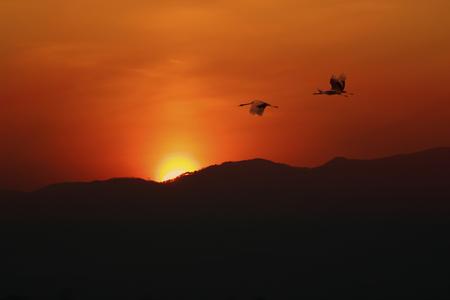 humilde: Sillhoette de volar pájaros en la puesta de sol