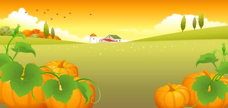 rolling landscape: Close-up of pumpkins Illustration