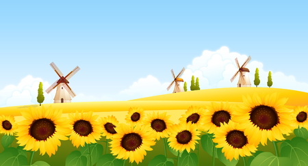 rolling landscape: Sunflowers in a field with traditional windmills in the background Illustration