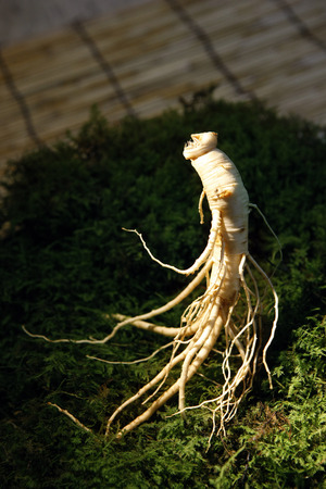 Ginseng displayed with herbs Stock Photo