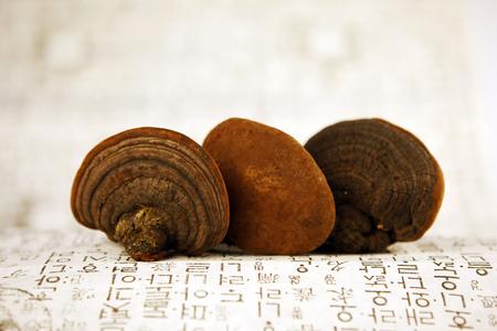 hongo: Hongos de Phellinus polypore