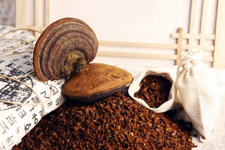 Phellinus polypore mushroom Stock Photo