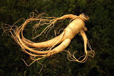Ginseng displayed with herbs Imagens - 78901707