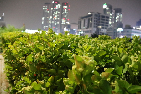folwer: Green leaves with the lit buildings in the background Stock Photo