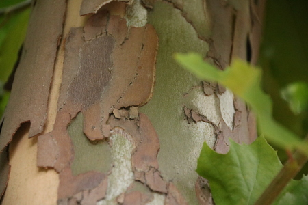 Close up shot of surface of tree, texture, background Stock Photo